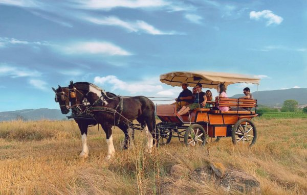 Paseo Carruaje Logroño
